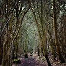 Wistful Wanderings by Vicki Field