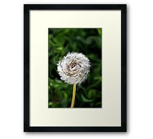 Furry  Pinwheel  Framed Print