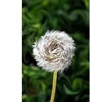 Furry  Pinwheel  Photographic Print