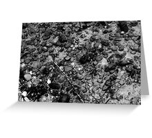 fine art pebbles under water black and white Greeting Card