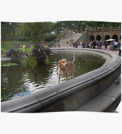 Cooling Off in Bethesda Fountain Poster