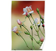 Rose Buds Poster