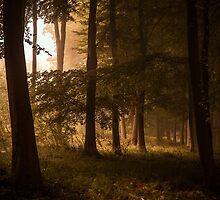 Kingswood by Ian Hufton