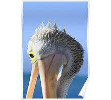 Pelican Eating Poster