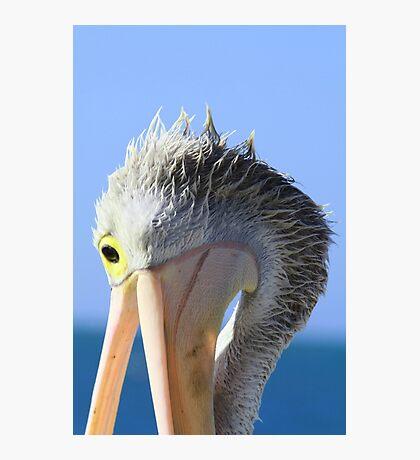 Pelican Eating Photographic Print