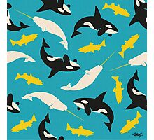 Orcas and Swordfish Photographic Print