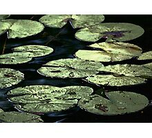 Blue Water Pond Lilies Photographic Print