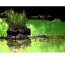 Rock Island In Green Waters Photographic Print