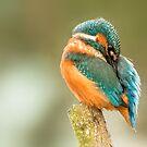Kingfisher by Ian Hufton