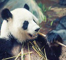 Panda Dining by Karol Livote