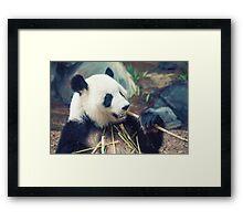Panda Dining Framed Print
