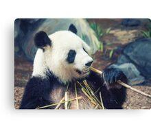Panda Dining Canvas Print