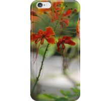 Barbados Spring Theme - Pride of Barbados (Dwarf Poinciana or Flower Fence) iPhone Case/Skin
