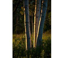 Natures Glow Photographic Print