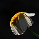 Flower 7201 by João Castro