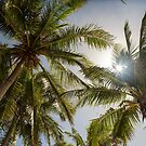 Tropical Sun by Bo Insogna