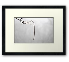 Catalpa pod on foggy day Framed Print