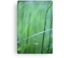 Grassland - two Canvas Print