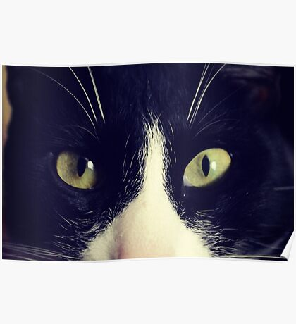 Panzon Bicolor cat Smokin Cat Pet Animal Poster