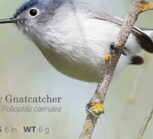 Blue-gray Gnatcatcher Infograph Sticker