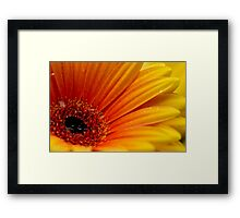 Daisy and Raindrops Framed Print