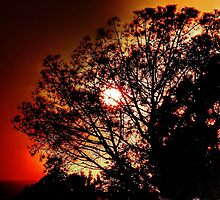 Orange Sunset by Stephen Burke