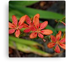 Red & Orange Orchid  Canvas Print