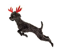 Black Poodle Christmas Reindeer with Red Antlers Photographic Print