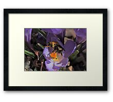 Can't get too much of a good thing Framed Print