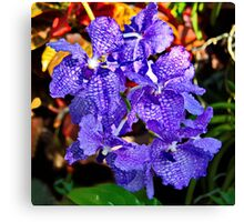 Purple Orchid #1 Canvas Print