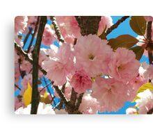 Bright Spring Cherry Blossoms Canvas Print