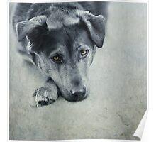 Luna Portrait Poster