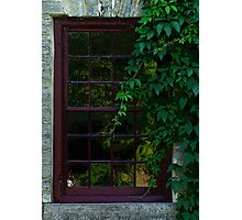 Old Window Wrapped With Vines Photographic Print