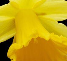 Delightful Daffodil Sticker