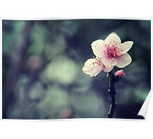 Flower Plum Blossoms photography Poster