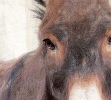 Wetnose Donkey Colour Sticker