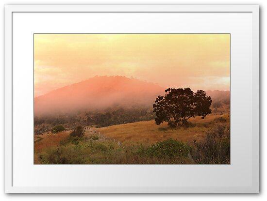 Early fog in the hills by Donuts