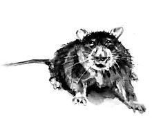 Rat Photographic Print