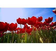 ...spring.. time to work with your wide angle lens...  Photographic Print