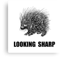 Sharp Porcupine Canvas Print