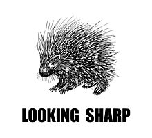 Sharp Porcupine Photographic Print