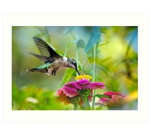 Sweet Success Hummingbird Art Print