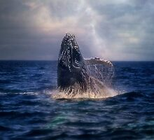 Humpback Rising  by Kathy Weaver