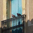 Birds eye view. by Paul Pasco
