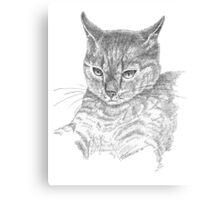 Wistful cat Canvas Print