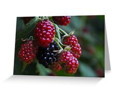 Berrys, red and Black, natur Greeting Card