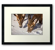 Two Searching Framed Print