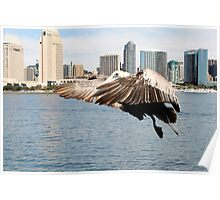 Pelican Ready To Land Poster