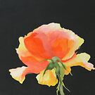 Yellow Rose - detail by Christine Clarke