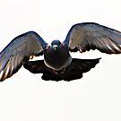 Pigeon Power by bertie01